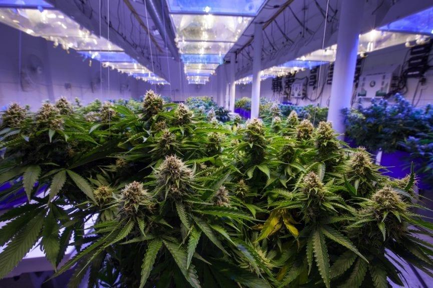 Grow house containing marijuana plant